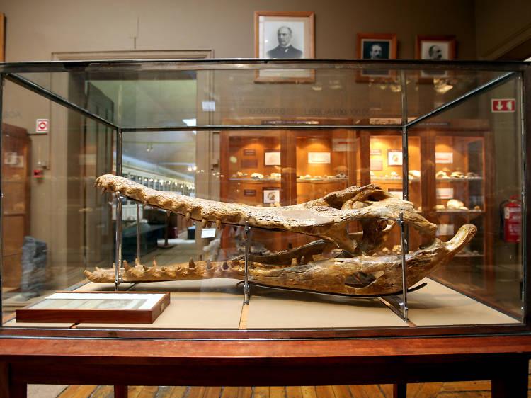 Houve um crocodilo em Chelas