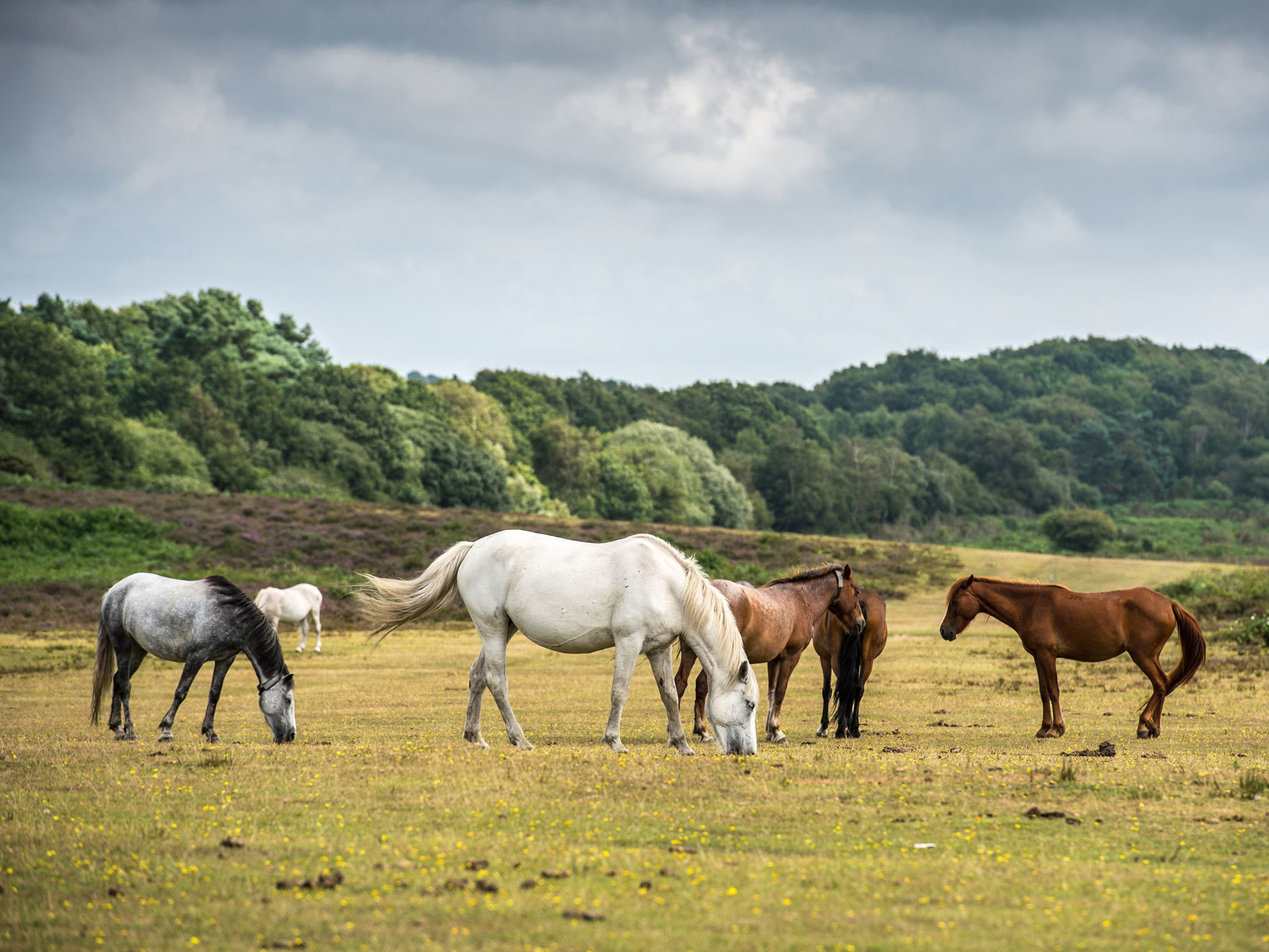 New Forest - best day trips from London 2018