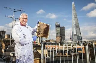 TYOK Urban beekeeper