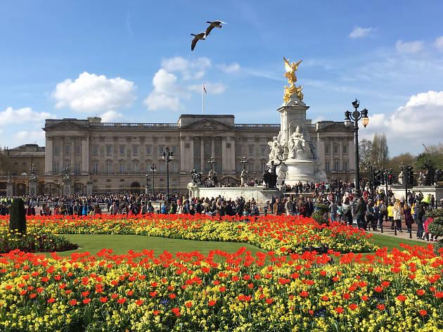 Tulips outside Buckingham Palace