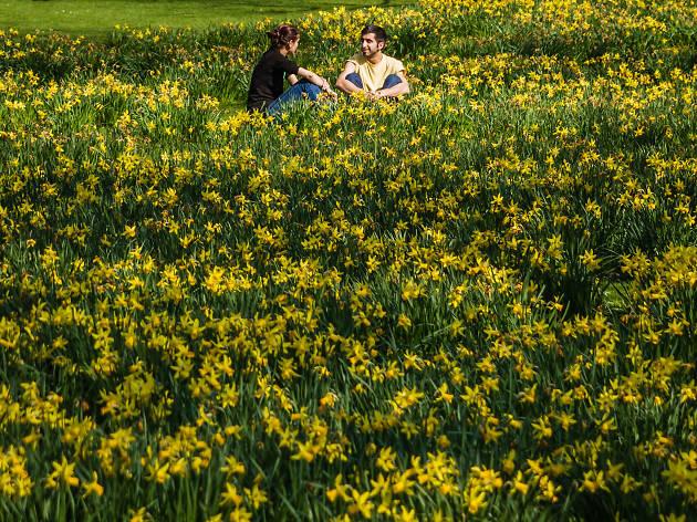 Daffoldils at St James Park
