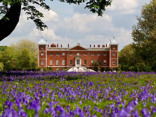 Osterley Park bluebells