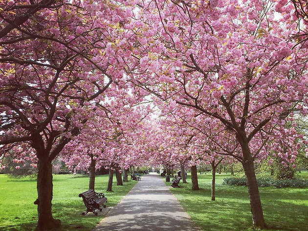 23 Stunning Places To See Spring Flowers In London Parks And Gardens