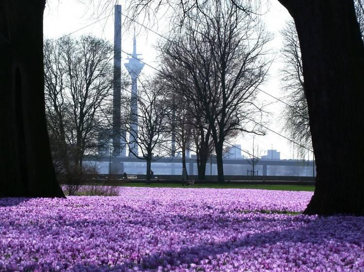 The best time to visit Düsseldorf