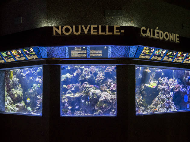 Palais de la porte dor e aquarium tropical mus es bel air paris - Aquarium tropical de la porte doree ...