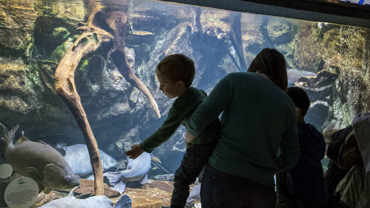 Palais Aquarium