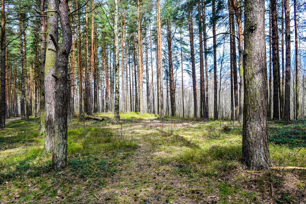 Los bosques más bonitos para visitar en la región