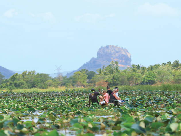 Enjoy a boat ride along the scenic Hiriwadunna wewa, a reservoir filled with water lilies