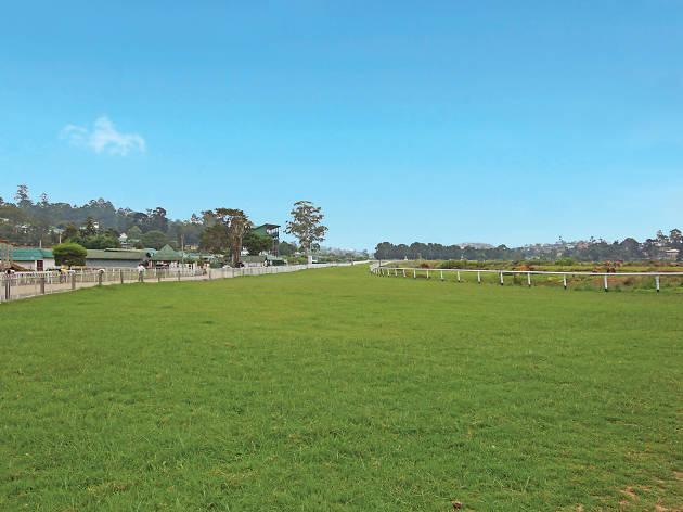 Horse racing, Royal turf club