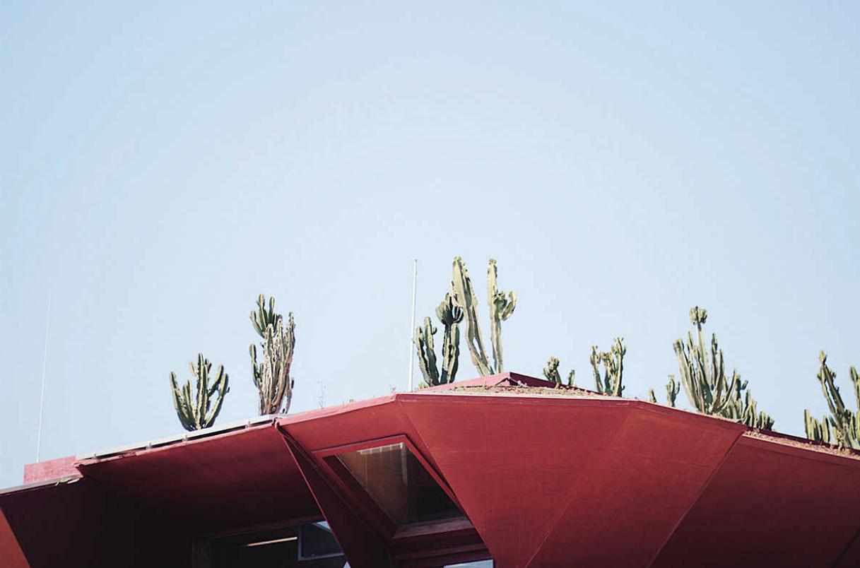 Jardí de cactus al teulat del restaurant