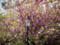 Notting Hill Blossom