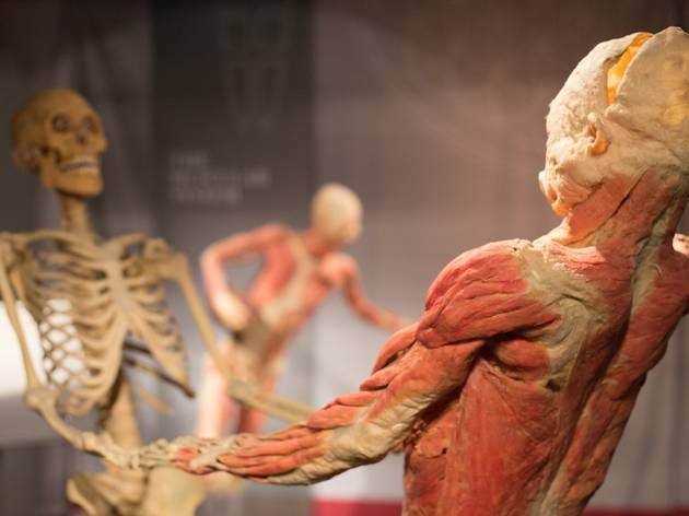 Real Bodies The Exhibition The Entertainment Quarter Museums In