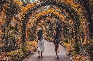 National Orchid Garden in Botanic Gardens by Cheryl (@lyrehcrm)