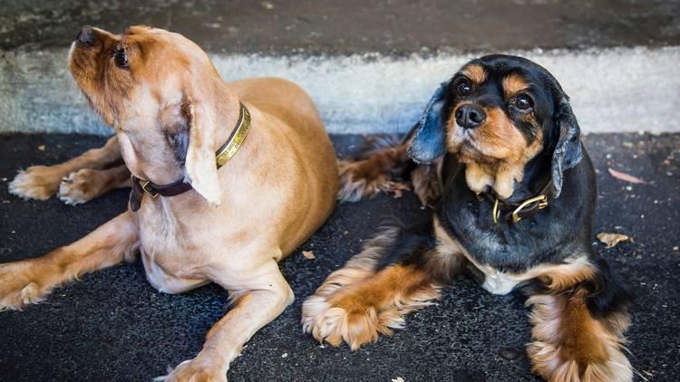 Dogs generic image