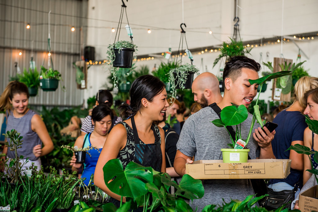 The Jungle Collective Indoor Plant Sale