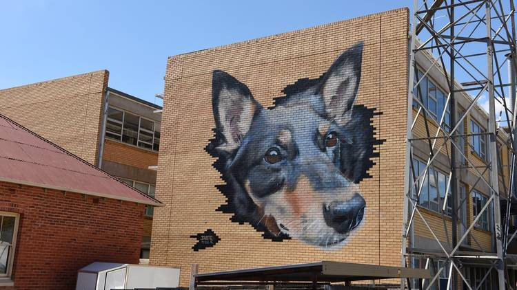 See street art in Benalla