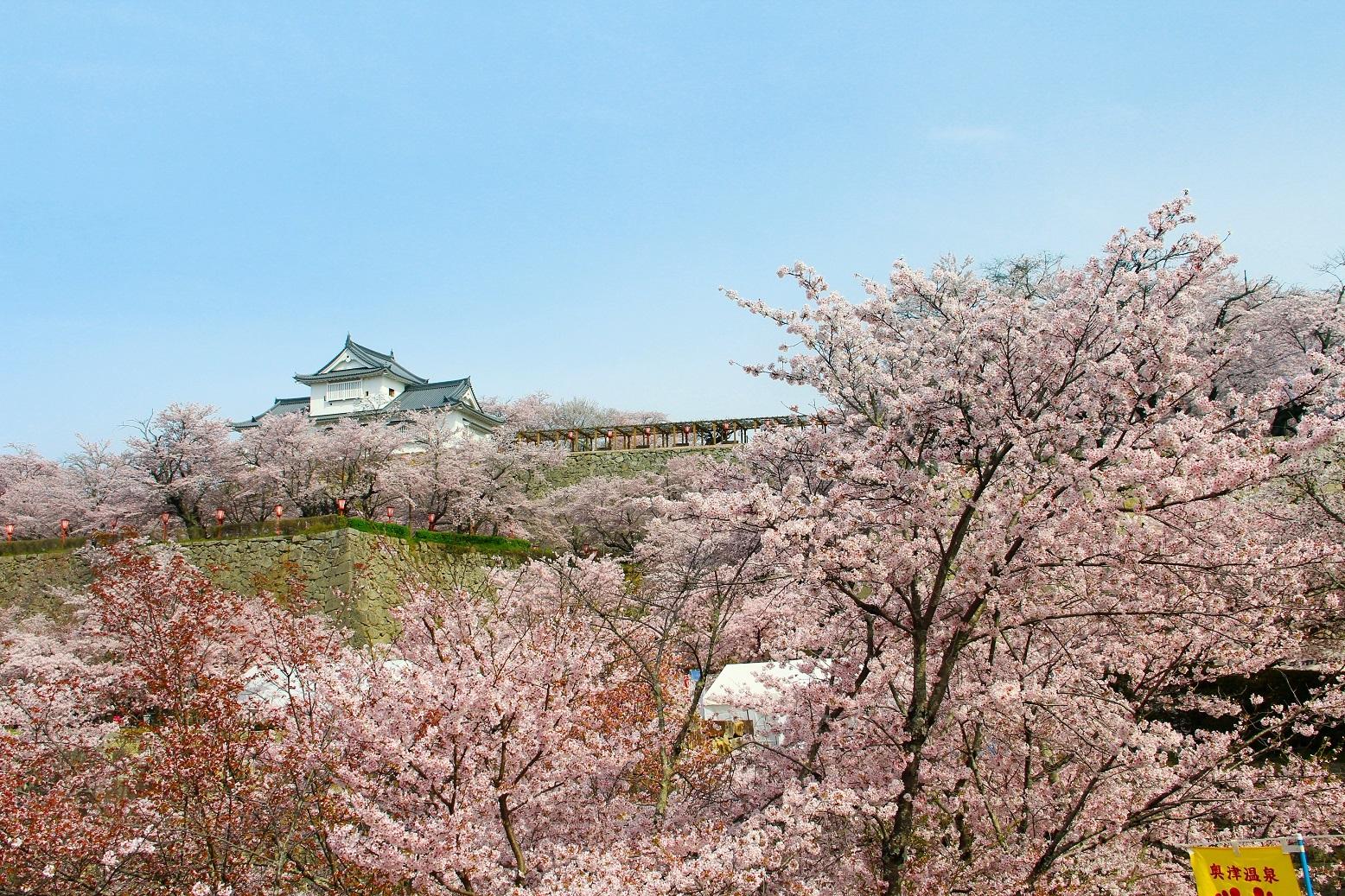 岡山縣—熱鬧櫻花祭