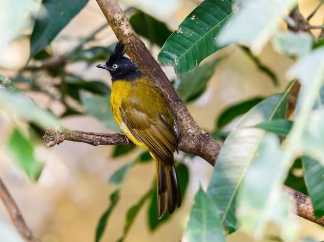 Bird in Hong Kong