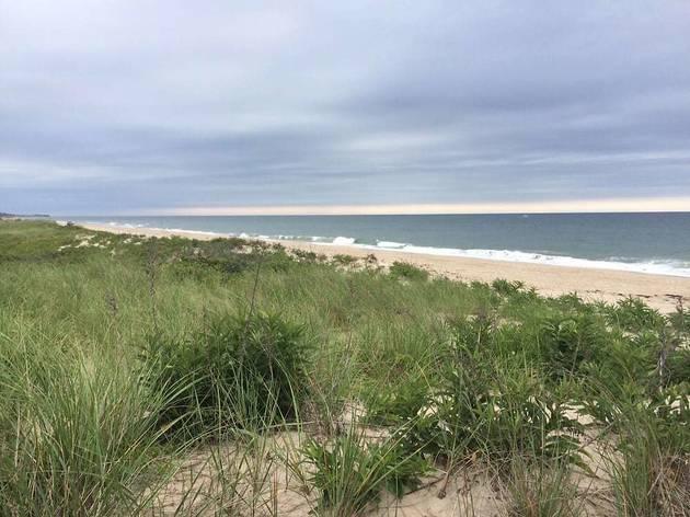 Beach Plum Resort