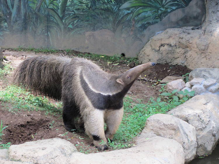 Edogawa-City Shizen Zoo