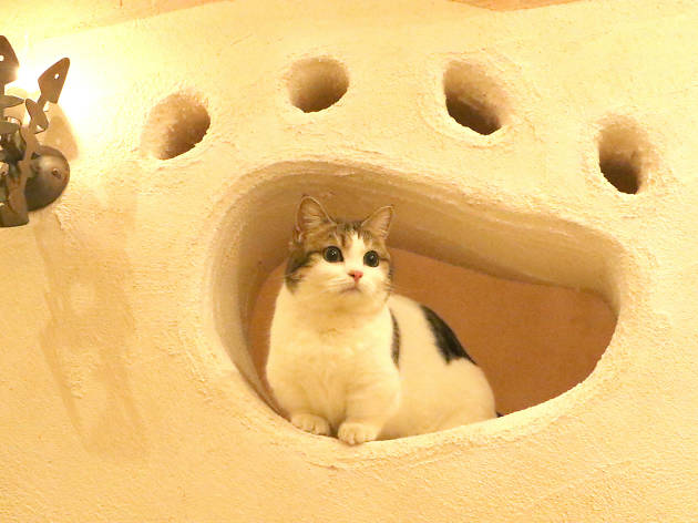 Best animal and pet cafés in Tokyo – updated