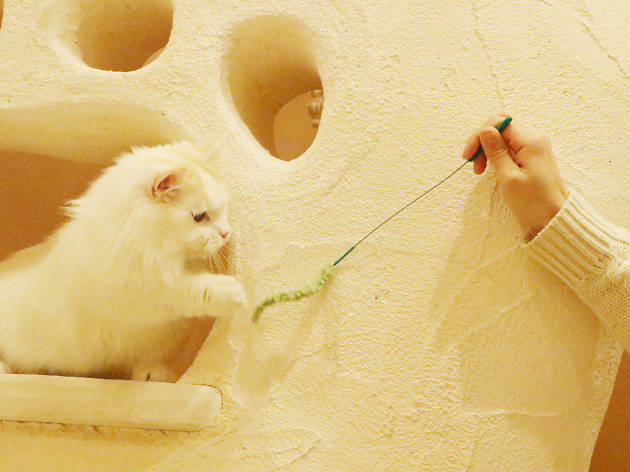 Temari no Oshiro Cat Café
