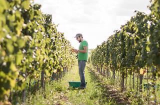 Wine Moments Organic Wine Tasting x Earth Week