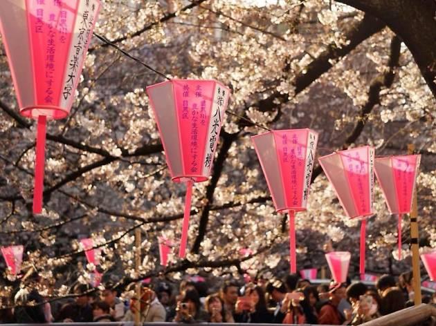 sakura japón kampai expo japan