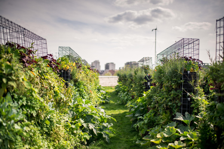 Un nouveau jardin partagé de 800 m2 sur un rooftop du 15e