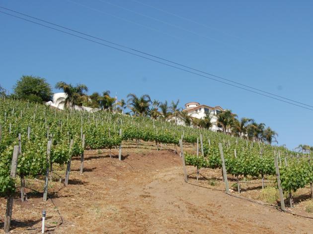 Colcanyon Estate Wines in Malibu