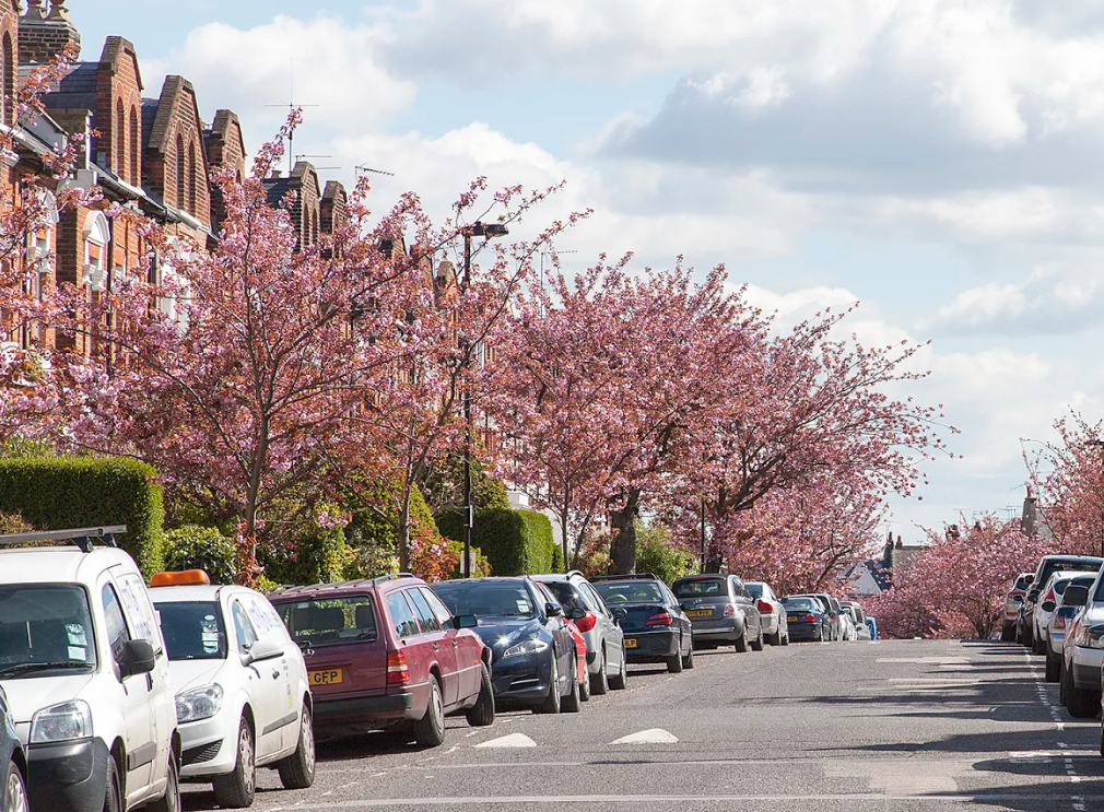 Image result for cherry blossoms crouch end