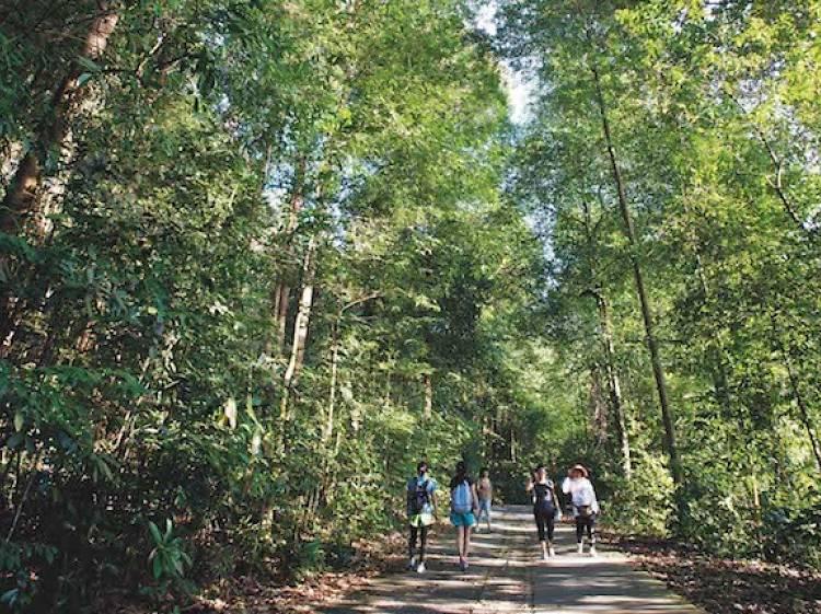 Neighbourhood guide: Bukit Timah