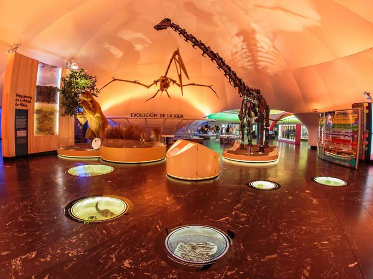Explora las nuevas salas del Museo de Historia Natural