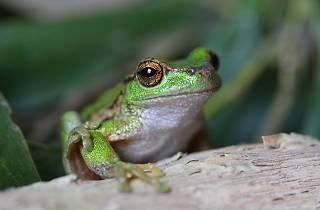 Zoos Victoria Hack the Frog