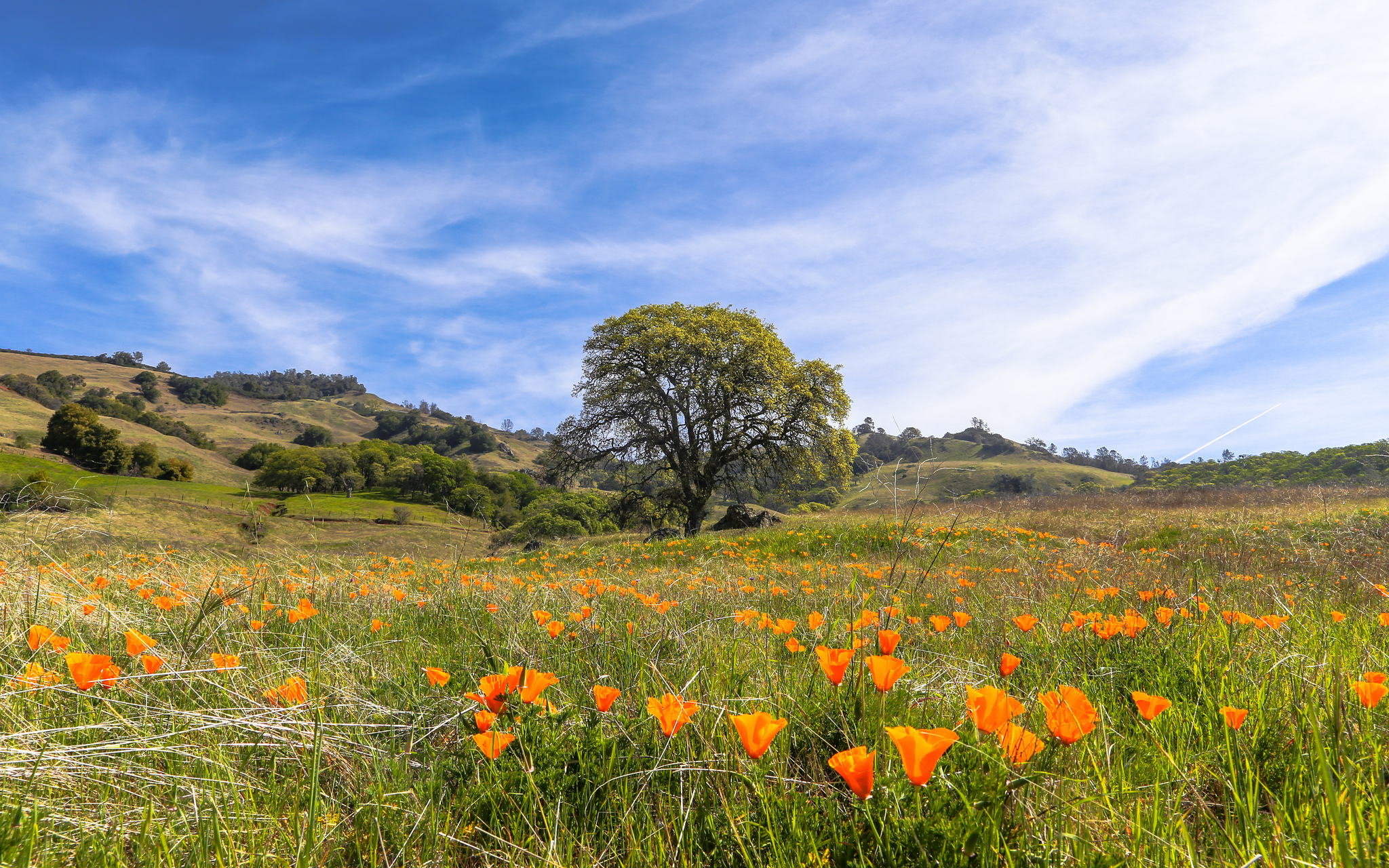 See colorful wildflowers on these Bay Area hikes