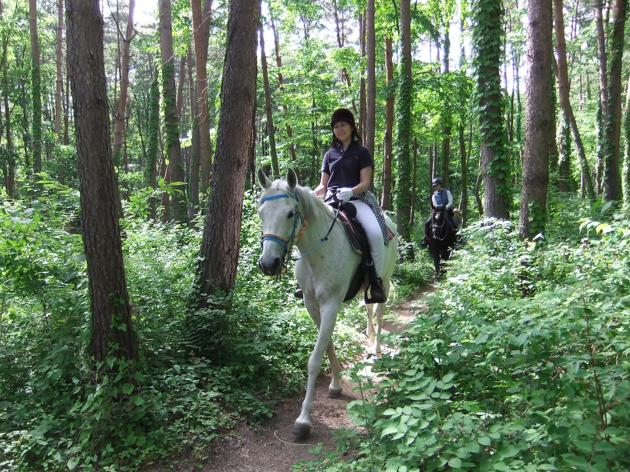 馬で八ヶ岳を駆ける。