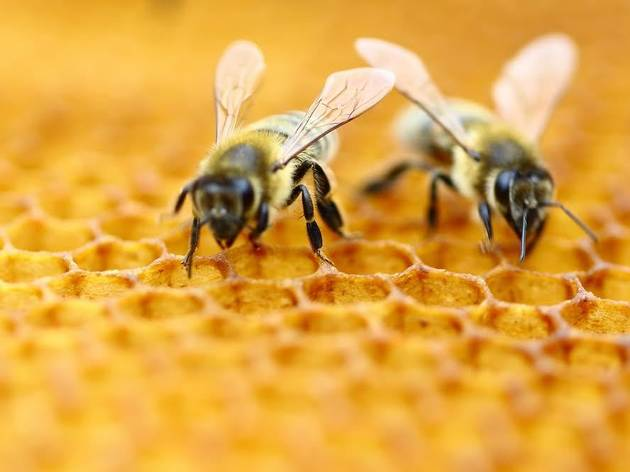 What's the buzz at Bryant Park? Honeybees make their debut for spring programs