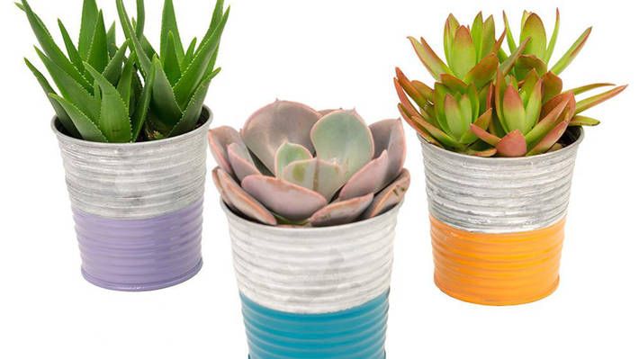 For the green thumb mom
