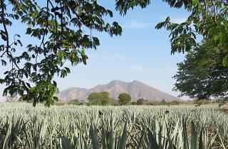 Akamba, el nuevo festival en Tequila