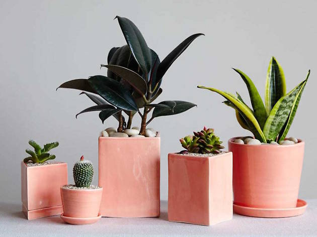 Best Plant Stores Nyc Offers To Create An Indoor Jungle