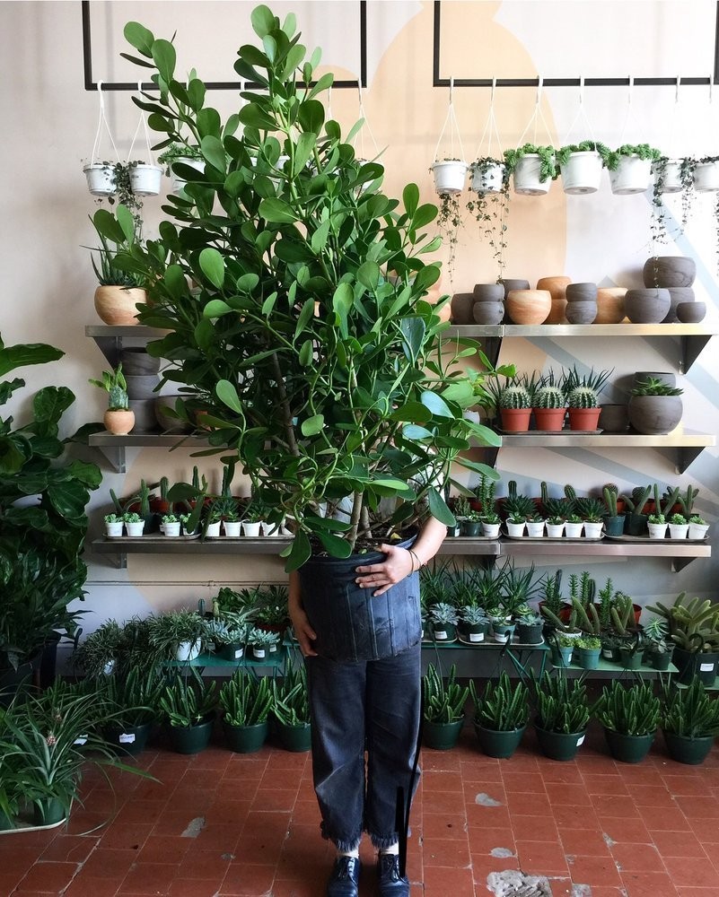 The best plant stores NYC has to offer