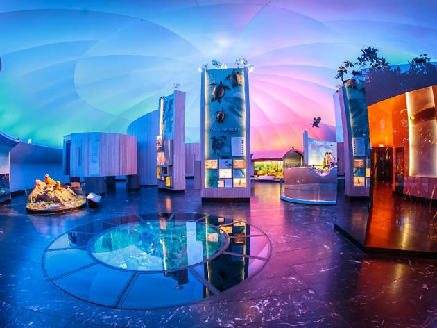 Nuevas salas del Museo de Historia Natural