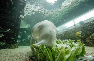 Dugong keeper experience Sea Life Sydney