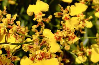 Singapore Garden Festival Orchid Show