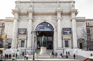 American Museum of Natural History's lawns will operate as a park this summer