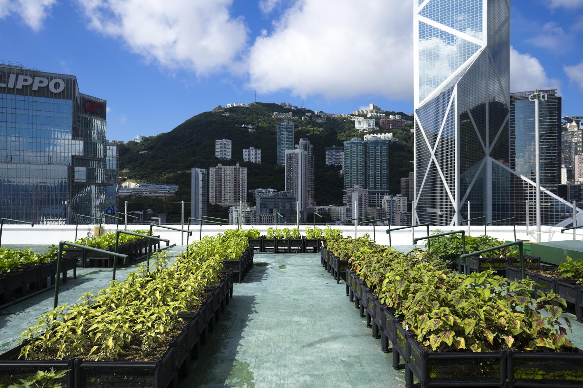 Urban Farm & Feast Hong Kong