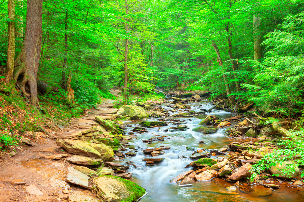 Ricketts Glen State Park is a great spot for hiking near Philadelphia, for neat streams, rivers and bridges.