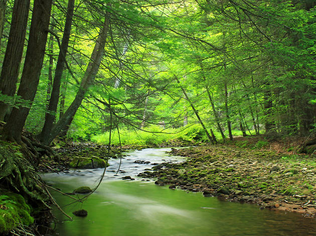 Head to Loyalsock State Forest for outstanding camping and hiking near Philadelphia.