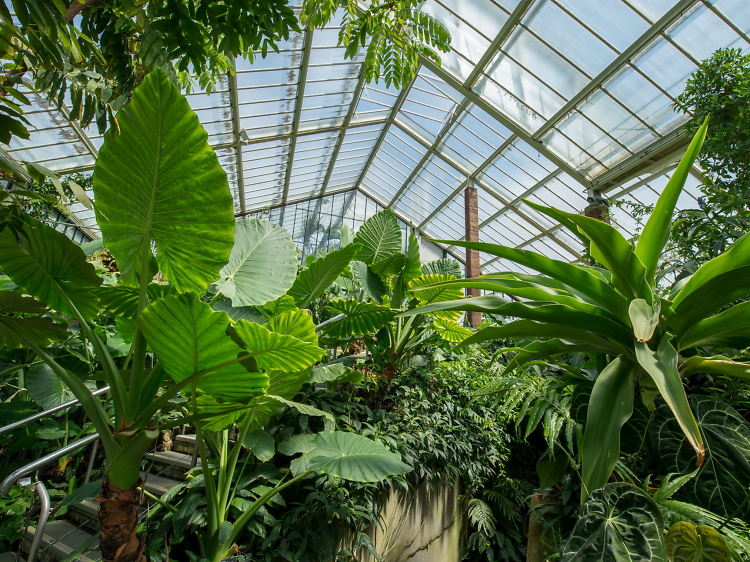 The prettiest conservatories in London