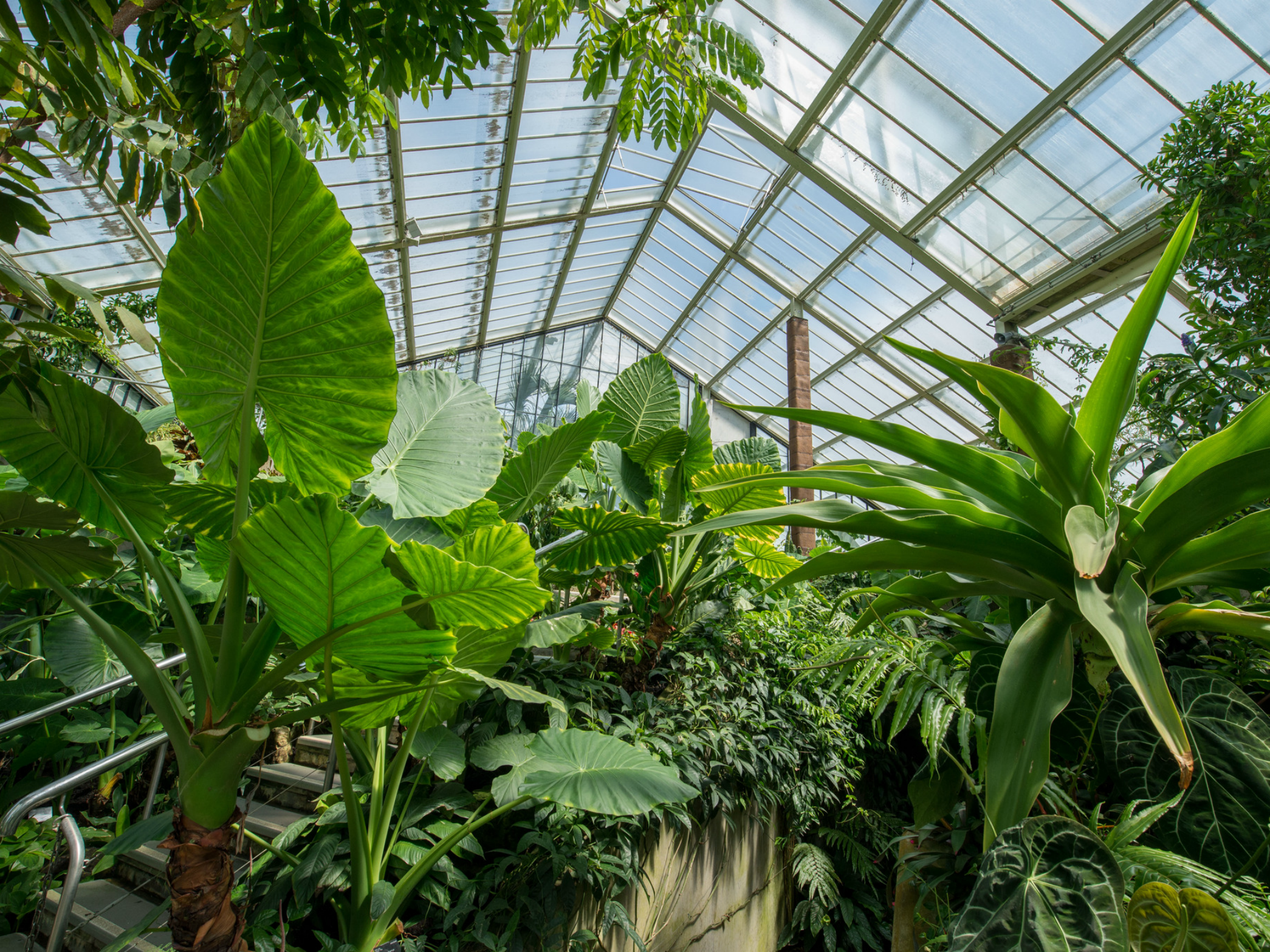 London's glorious greenhouses